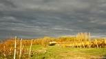 vignoble-laulan-automne-2016-2