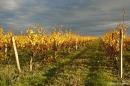 vignoble-laulan-automne-2016-5