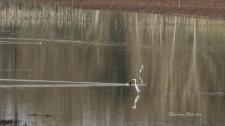 2017-01-29-journee-zone-humide-au-lac-de-lescourou-3