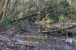 journee-mondiale-des-zones-humides-2017-au-lac-du-saut-du-loup-10