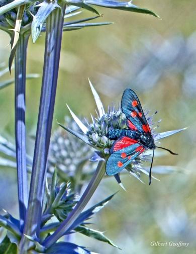 valcebolère-pyr orient (19)
