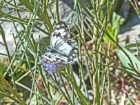 valcebolère-pyr orient (28)